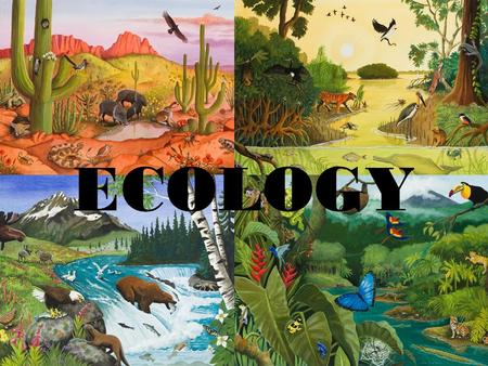 ECOLOGY. Ecology The scientific study of how living things respond to the environment.