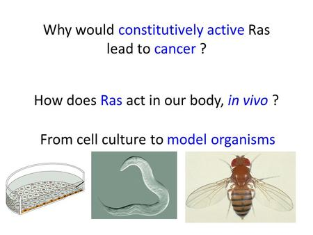 How does Ras act in our body, in vivo ? Why would constitutively active Ras lead to cancer ? From cell culture to model organisms.