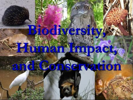 Biodiversity, Human Impact, and Conservation. Lecture 1: Biodiversity Biodiversity is the variation of lifeforms within a given ecosystem. Biodiversity.