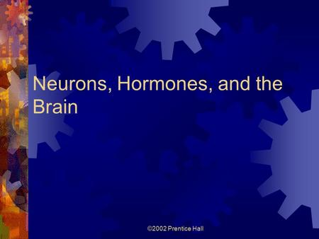 ©2002 Prentice Hall Neurons, Hormones, and the Brain.