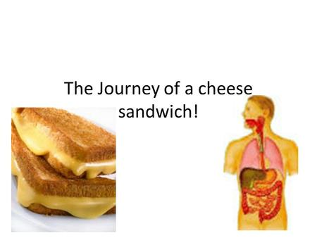 The Journey of a cheese sandwich!