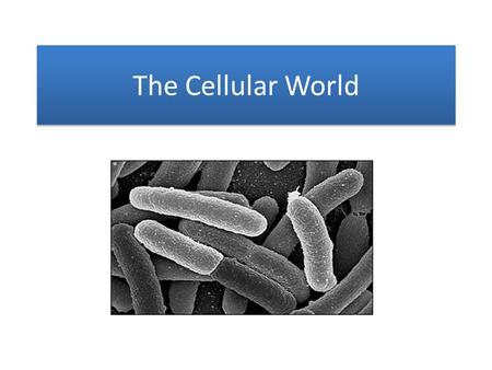The Cellular World. Eukaryotic Cells Includes: animal cells, plant cells, protist cells, and fungi cells.