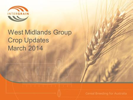 West Midlands Group Crop Updates March 2014. Wheat NVT wheat variety performance 2013 Dandaragan site performance 2009-13 Long-term NVT yield performance.