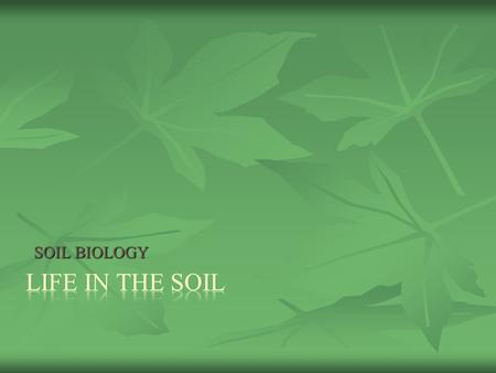 SOIL BIOLOGY. There are a DIVERSITY of ORGANISMS in SOIL There are a DIVERSITY of ORGANISMS in SOIL SIZE SIZE MICROORGANISMS MICROORGANISMS MACROORGANISMS.