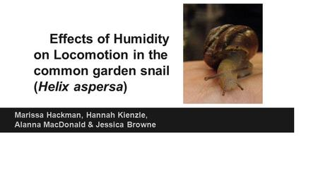 Effects of Humidity on Locomotion in the common garden snail (Helix aspersa) Marissa Hackman, Hannah Kienzle, Alanna MacDonald & Jessica Browne.