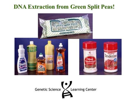 DNA Extraction from Green Split Peas!. DNA Extraction Procedure Blend for 15 seconds: DNA source – 100 ml green split peas Cold water – 200 ml salt Large.