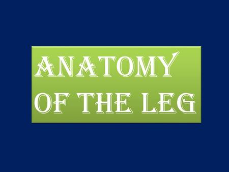 Anatomy Of The leg.