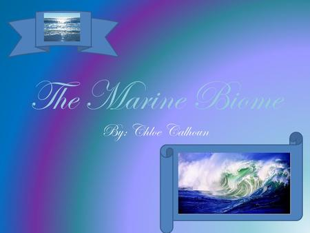 The Marine Biome By: Chloe Calhoun.  Being the biggest biome on Earth, the marine biome takes up 70% of the planet's surface!  It has 5 main oceans: