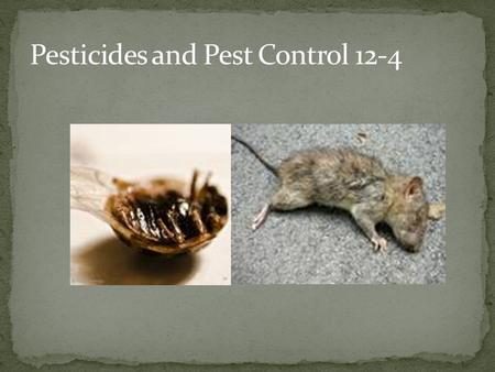 Pests: Any species that competes with us for food, invades lawns and gardens, destroys wood in houses, spreads disease, or is a nuisance.