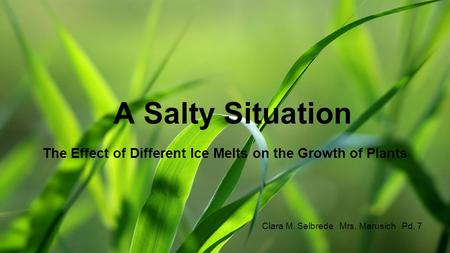 A Salty Situation The Effect of Different Ice Melts on the Growth of Plants Clara M. Selbrede Mrs. Marusich Pd. 7.