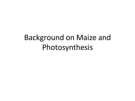 Background on Maize and Photosynthesis. Corn or Maize – Zea mays.