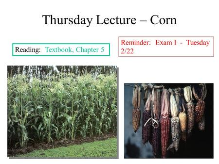Thursday Lecture – Corn