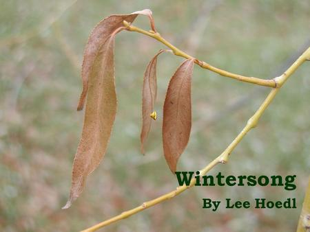 Wintersong By Lee Hoedl. It enters on its dusted wings; in silence and innocence.