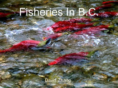 Fisheries In B.C. David Zhang. Origination Natives have been fishing in B.C. since their origination B.C. fishing industry started in 1870 when the first.