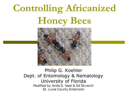 Controlling Africanized Honey Bees Philip G. Koehler Dept. of Entomology & Nematology University of Florida Modified by Anita S. Neal & Ed Skvarch St.