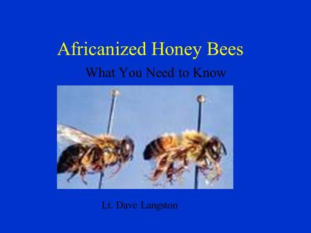 Africanized Honey Bees What You Need to Know Lt. Dave Langston.
