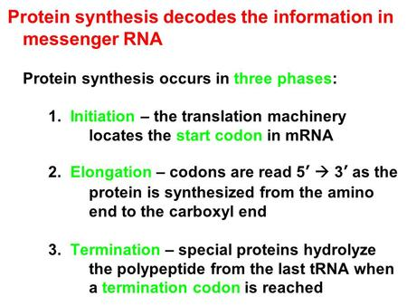 Protein synthesis decodes the information in messenger RNA Protein synthesis occurs in three phases: 1. Initiation – the translation machinery locates.
