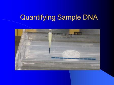 Quantifying Sample DNA. Definition Quantifying DNA: a technique to calculate the quantity (weight) of DNA (deoxyribonucleic acid) in a sample. Using a.