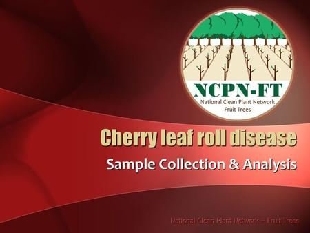 Cherry leaf roll disease Sample Collection & Analysis.