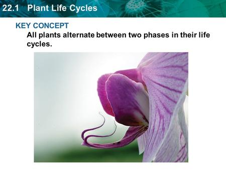 22.1 Plant Life Cycles KEY CONCEPT All plants alternate between two phases in their life cycles.