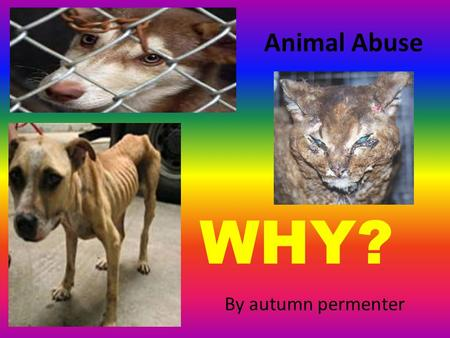 Animal Abuse By autumn permenter WHY?. My Thesis Statement: Thousands of pets are beaten and hurt every year. People want companionship, and without much.