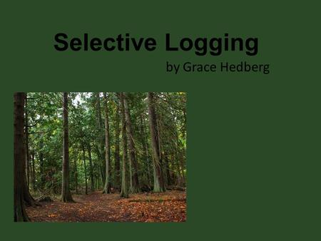 Selective Logging by Grace Hedberg.