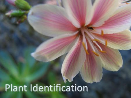 Plant Identification. Why do we identify plants?