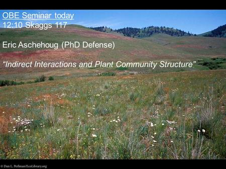 "OBE Seminar today 12:10 Skaggs 117 Eric Aschehoug (PhD Defense) ""Indirect Interactions and Plant Community Structure"""