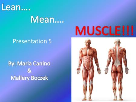Presentation 5. Exercise and its Impact on Muscle Exercise has a profound effect on muscle growth, which can occur only if muscle protein synthesis exceeds.