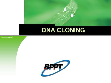 Cloning genetic engineering worksheets