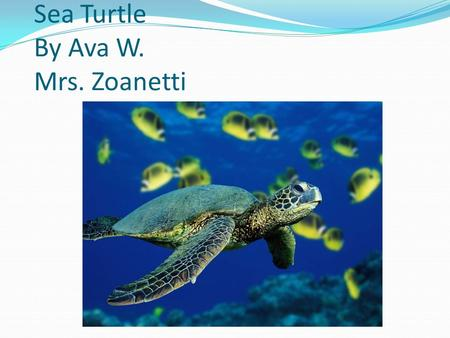 Sea Turtle By Ava W. Mrs. Zoanetti Appearance Green scaly skin Legs that look like hands, and arms that look like legs.