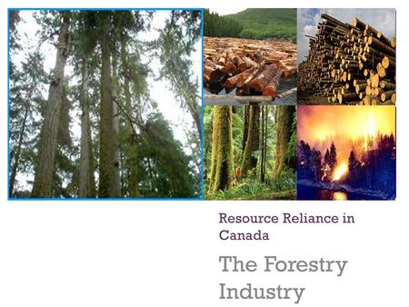 + Resource Reliance in Canada The Forestry Industry.