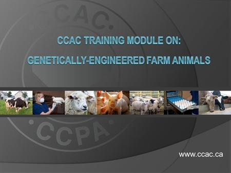 Www.ccac.ca.  This training module is relevant to all animal users working with genetically-engineered (GE) farm animals in research, teaching or testing.