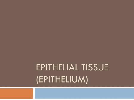 EPITHELIAL TISSUE (EPITHELIUM). Epithelial tissue (Epithelium)  Lining, covering and glandular tissue of the body  Protection  Absorption  Filtration.
