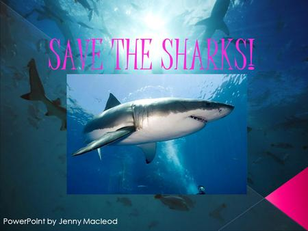 SAVE THE SHARKS! PowerPoint by Jenny Macleod. What are A shark is a marine fish. Most sharks are carnivores but the biggest sharks are usually herbivores.