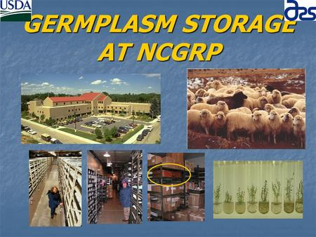 GERMPLASM STORAGE AT NCGRP. OUTLINE Seed Storage – 9:00-9:40 Seed Storage – 9:00-9:40 David Brenner David Brenner Storage of Vegetatively Propagated Crops.