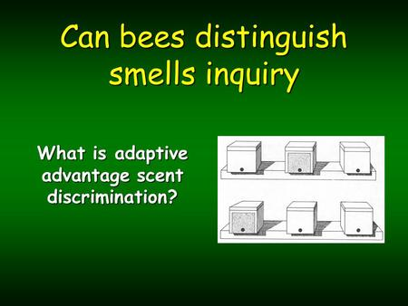Can bees distinguish smells inquiry What is adaptive advantage scent discrimination?