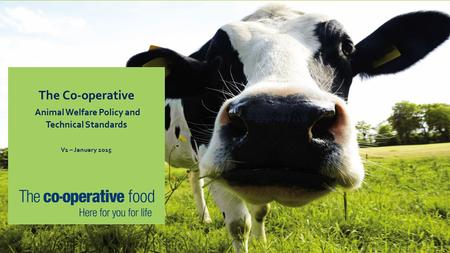The Co-operative Animal Welfare Policy and Technical Standards V1 – January 2015.