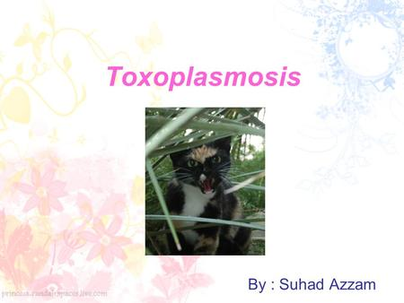 Toxoplasmosis By : Suhad Azzam.
