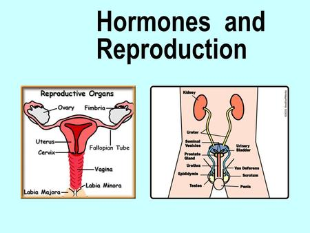 Hormones and Reproduction. Hypothalamus:  analyses nervous signals from other areas of the brain  also analyses hormonal signals generated in the ovaries.