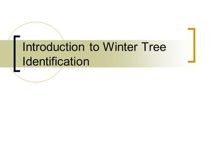 Introduction to Winter Tree Identification. Coniferous Trees These are trees that hold on to their leaves all year round. Their leaves are needle or scale-like.
