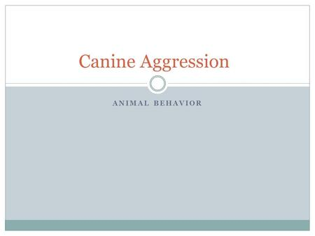 ANIMAL BEHAVIOR Canine Aggression. Don't Label the Dog! Identify the ______________…correctly Work with the animal, don't ___________them. Understand.
