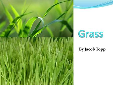 By Jacob Topp. We are learning to research about grass.