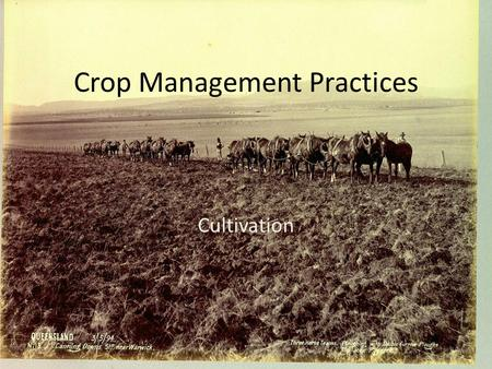 Crop Management Practices Cultivation. Preparing the soil Plants need nutrients to grow so it can be a good idea to apply fertilizer to the paddock you.