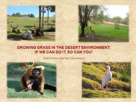 GROWING GRASS IN THE DESERT ENVIRONMENT: IF WE CAN DO IT, SO CAN YOU! Robin Fischer, Hilda Tresz, David Arnold.