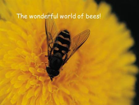 The wonderful world of bees!. So what is a bee? Honey bees are often mistaken for other insects. Honey bees are often mistaken for other insects. Take.