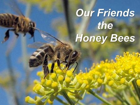 Our Friends the Honey Bees. Brought to you by the.