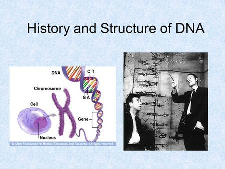 History and Structure of DNA. Deoxyribonucleic Acid A double-stranded polymer of nucleotides (each consisting of a deoxyribose sugar, a phosphate, and.