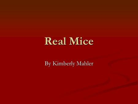 Real Mice By Kimberly Mahler What Mice Eat Mice eat small berries, caterpillars, beetles, grasshoppers, leafhoppers and underground fungus. Mice have.