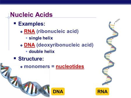 AP Biology Nucleic Acids  Examples:  RNA (ribonucleic acid)  single helix  DNA (deoxyribonucleic acid)  double helix  Structure:  monomers = nucleotides.